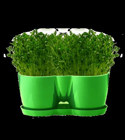 گلدان با بذر و کود